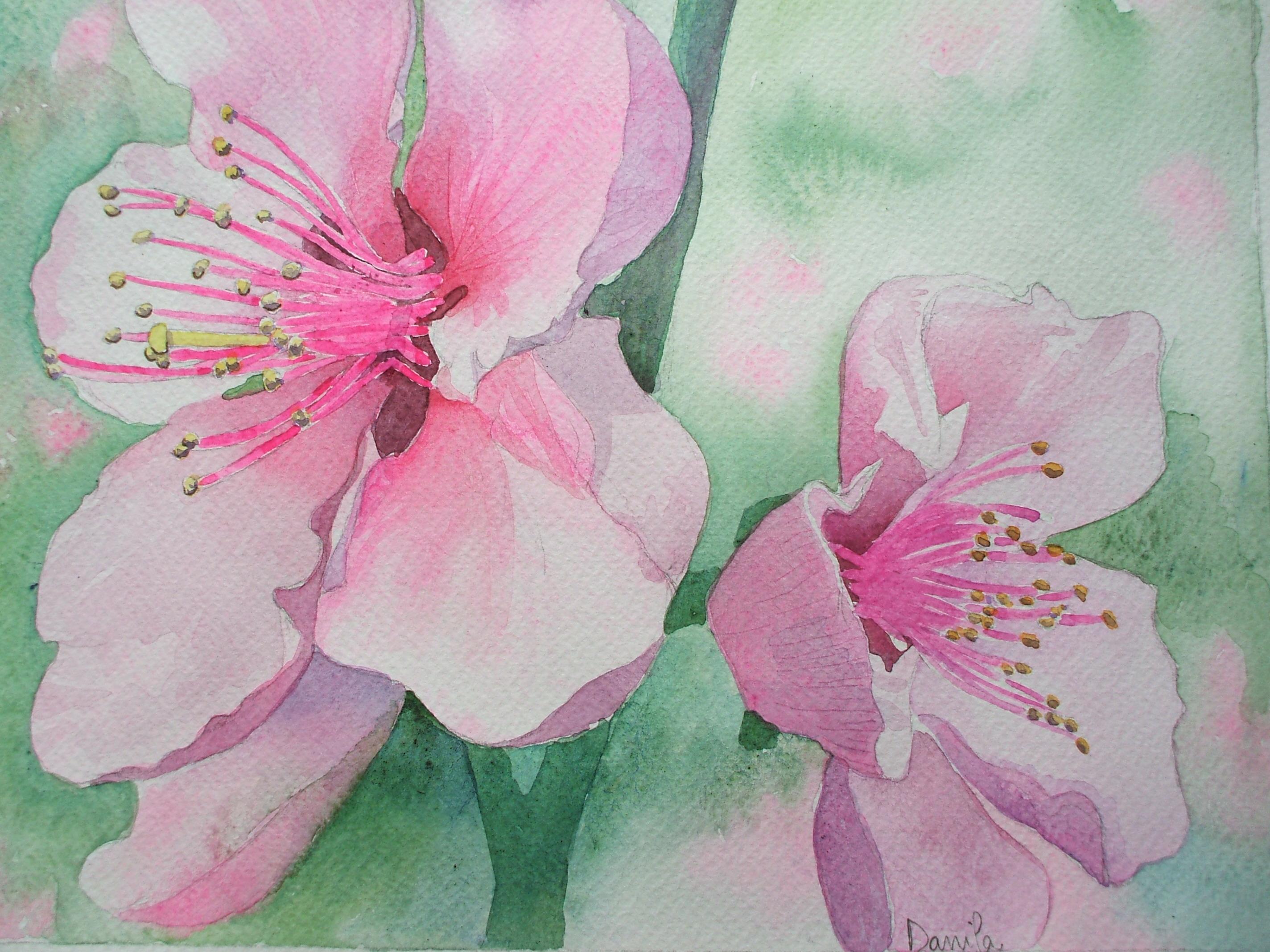 Fiori di ciliegio giapponese estri in laboratorio for Fiori di ciliegio dipinti