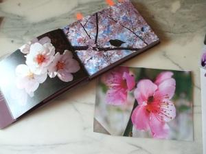 foto fiori cigliegio