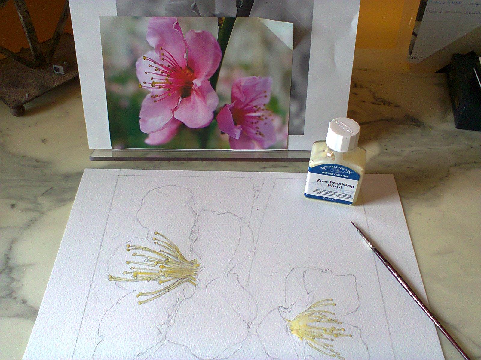 Fiori di ciliegio giapponese estri in laboratorio for Disegni di fiori a matita