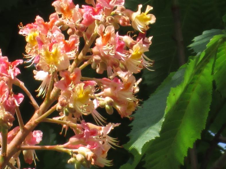 fiore d'albero