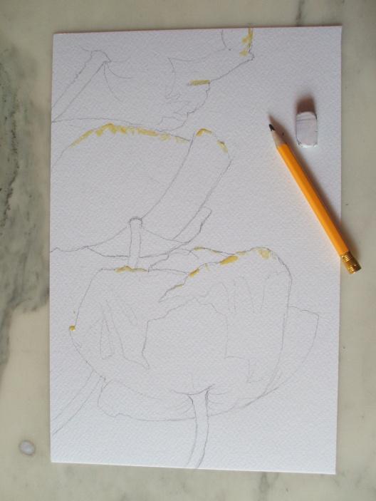 papaveri grossi 1