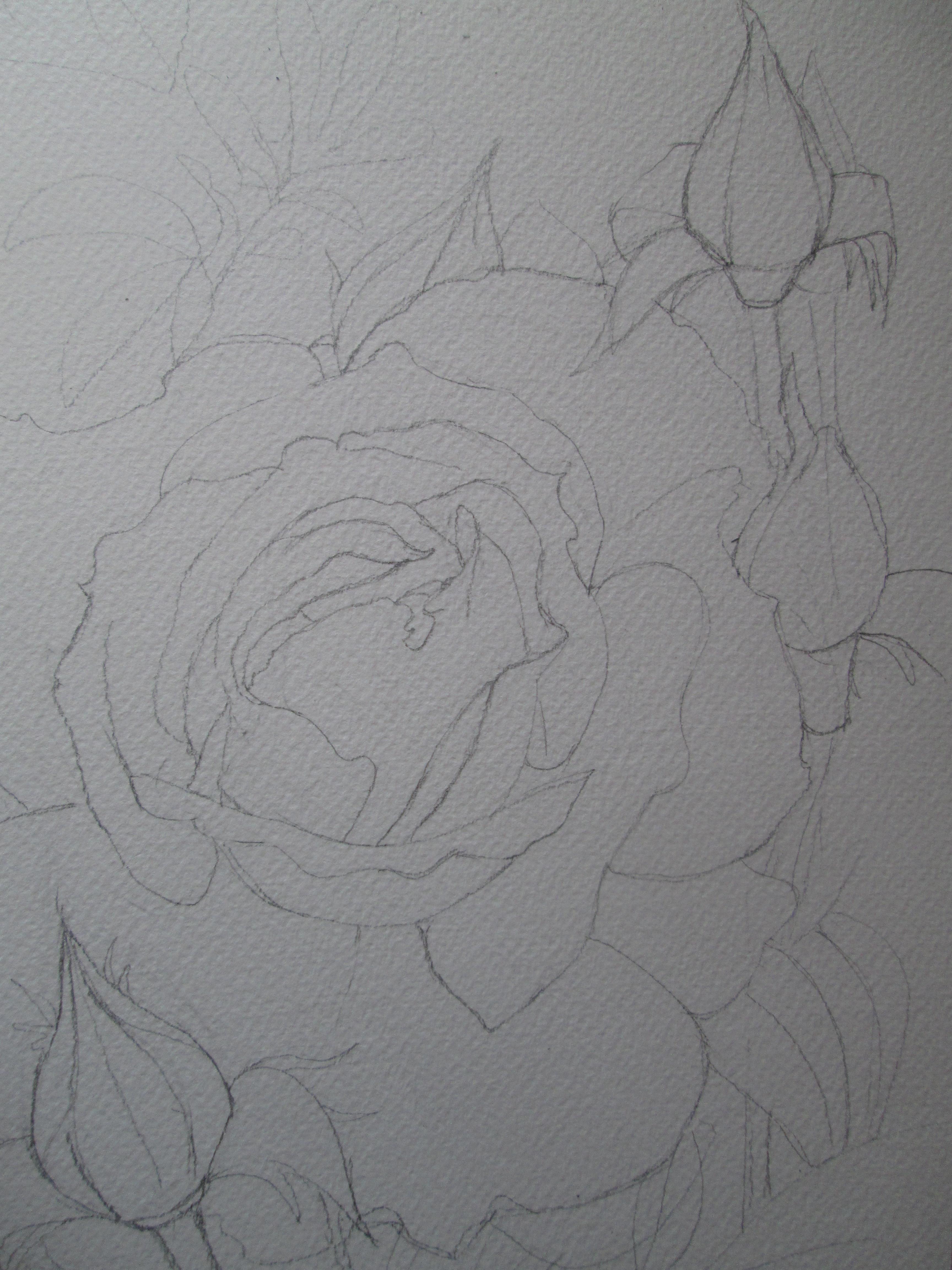 Una Rosa Gialla Per Olly Estri In Laboratorio